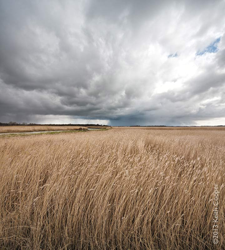 Reed beds beside the River Alde in Suffolk at Snape